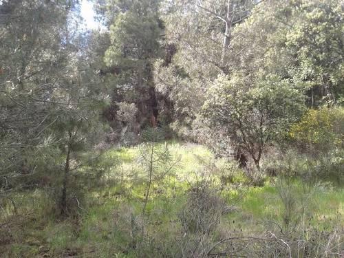 imagen 1 de Venta de parcela en Santibáñez el Alto (Cáceres)