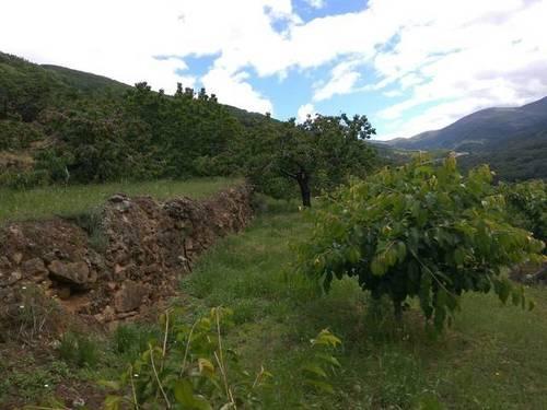 imagen 2 de Venta de finca en producción en Valle del Jerte (Cáceres)