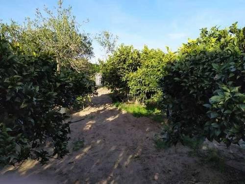 imagen 1 de Venta de terreno en con casa en Chipiona (Cádiz)