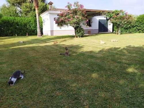 imagen 2 de Venta de terreno en con casa en Chipiona (Cádiz)