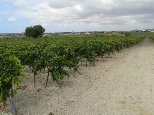 imagen 1 de Venta de finca con viñedo en El Puerto de Santa María (Cádiz)