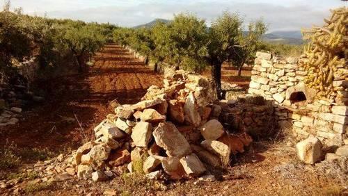 imagen 2 de Venta de finca de almendros en Ribera de Cabanes (Castellón)