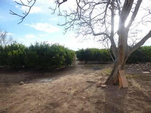 imagen 2 de Venta de preciosa finca de naranjos en Castellón de la Plana (Castellón)