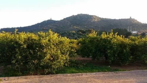 imagen 1 de Venta de huerta de mandarina en Almenara (Castellón)