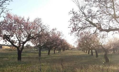 imagen 1 de Venta de finca de almendros en Benlloch (Castellón)