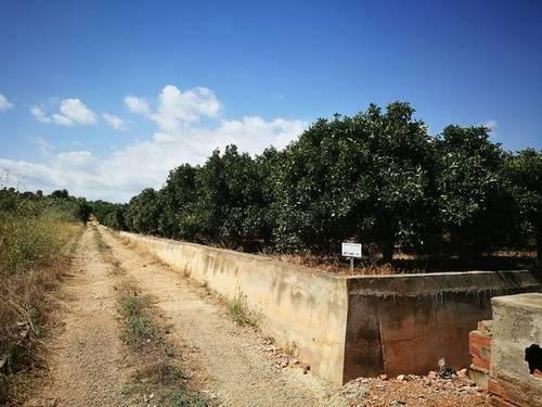 imagen 3 de Venta de finca de naranjos en Benicarló (Castellón)