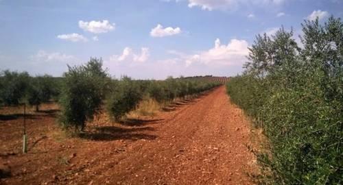 imagen 1 de Venta de finca olivar y viñedo en Valdepeñas (Ciudad Real)