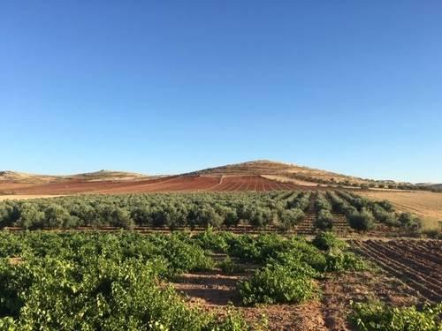 imagen 1 de Venta de magnífica finca olivar en Calzada de Calatrava (Ciudad Real)