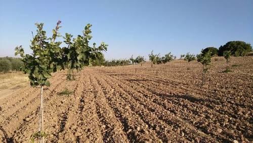 imagen 1 de Venta de finca de pistachos en Manzanares (Ciudad Real)
