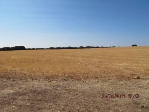 imagen 3 de Venta de gran terreno en Montiel (Ciudad Real)