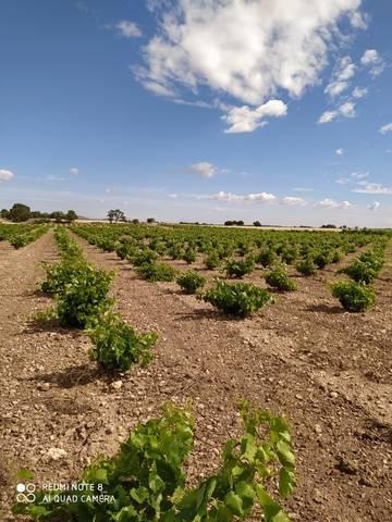 imagen 1 de Venta de viñedo con olivos en Herencia (Ciudad Real)
