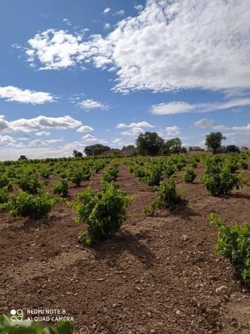 imagen 2 de Venta de viñedo con olivos en Herencia (Ciudad Real)