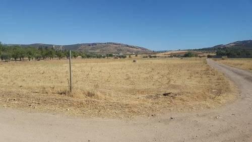 imagen 1 de Venta de finca en Puertollano (Ciudad Real)