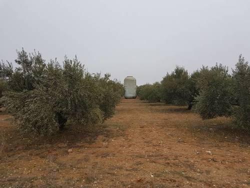 imagen 1 de Venta de finca olivar en Pedro Muñoz (Ciudad Real)