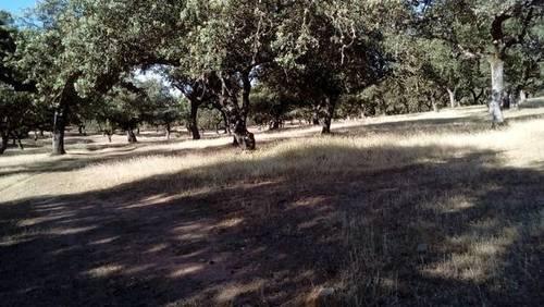imagen 1 de Venta de encinar en Fuente Obejuna (Córdoba)