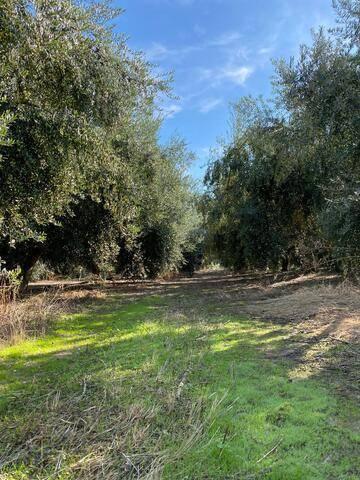 imagen 2 de Venta de finca olivar en Palma del Río (Córdoba)