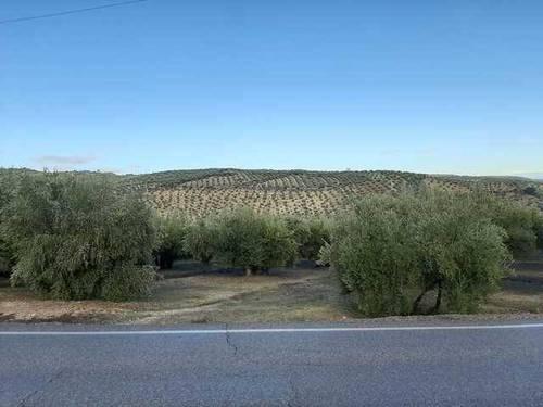 imagen 1 de Venta de finca olivar en Zuheros (Córdoba)