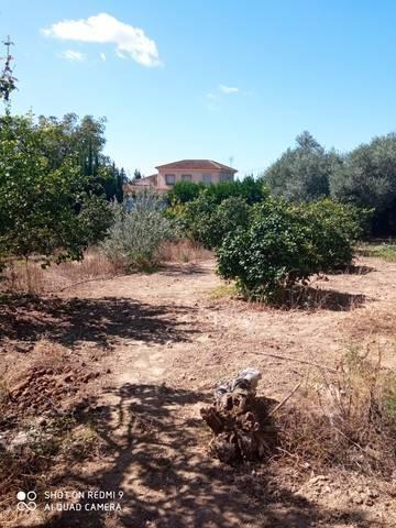 imagen 1 de Venta de estupenda parcela en Palma del Río (Córdoba)