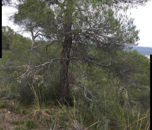 imagen 1 de Venta de estupenda finca en La Pesquera (Cuenca)