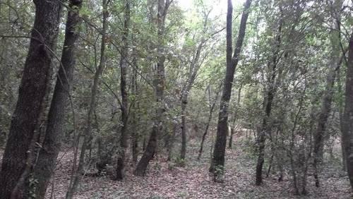 imagen 2 de Venta de gran finca en Brunyola/Bruñola (Gerona)