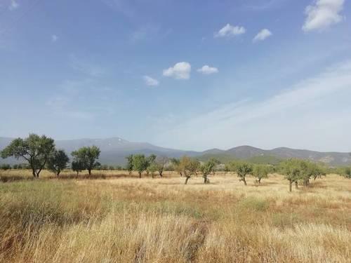 imagen 2 de Venta de finca en Jerez del Marquesado (Granada)