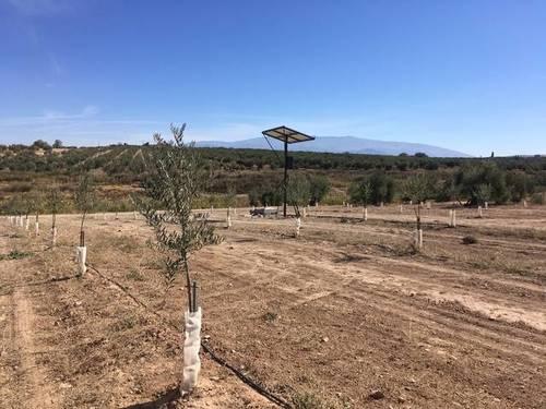imagen 1 de Venta de estupendo olivar en Chimeneas (Granada)