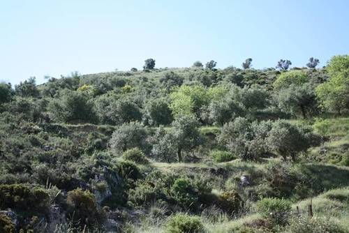 imagen 4 de Venta de finca en Cogollos de la Vega (Granada)