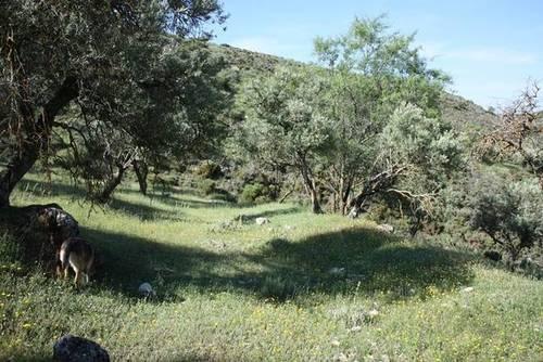 imagen 2 de Venta de finca en Cogollos de la Vega (Granada)