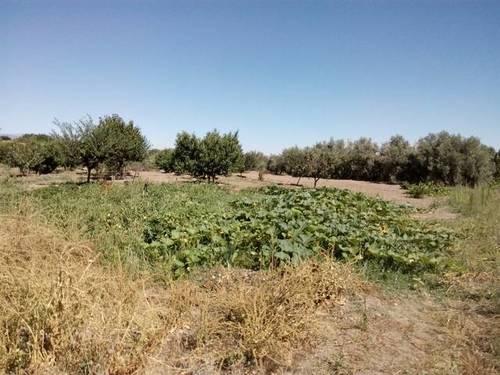 imagen 2 de Venta de estupendo terreno en Guadix (Granada)