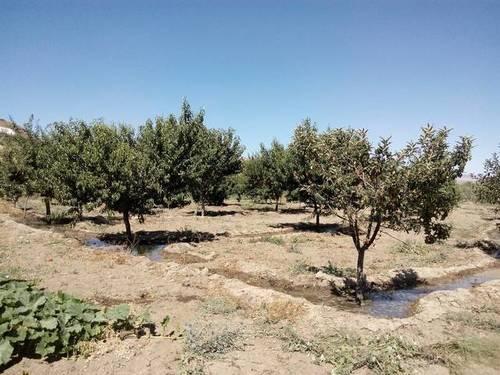imagen 3 de Venta de estupendo terreno en Guadix (Granada)