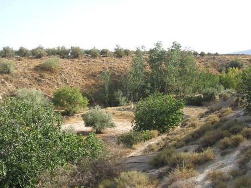 imagen 3 de Venta de estupenda finca olivar en Baza (Granada)