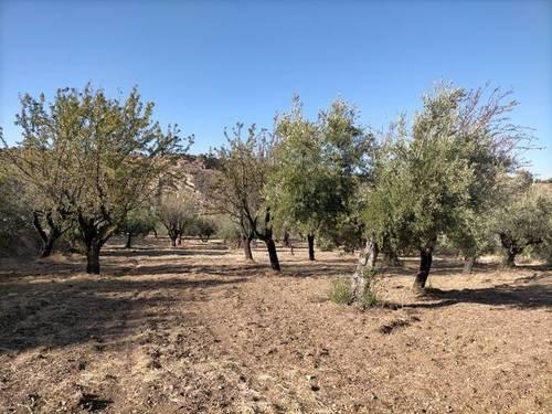 imagen 1 de Venta de terreno en Monachil (Granada)