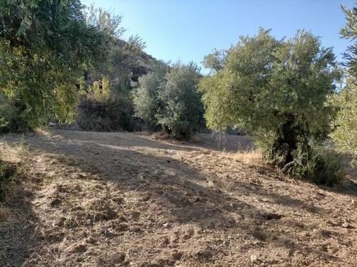 imagen 2 de Venta de terreno en Monachil (Granada)