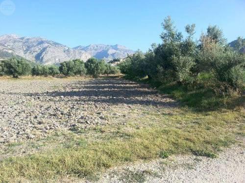 imagen 1 de Venta de olivar en Castril (Granada)