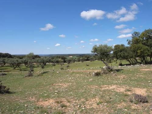 imagen 1 de Venta de campo olivar en Escariche (Guadalajara)