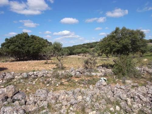 imagen 2 de Venta de campo olivar en Escariche (Guadalajara)