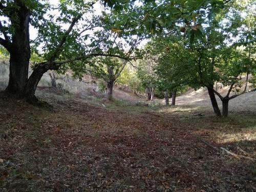 imagen 1 de Venta de finca castañar en Galaroza (Huelva)