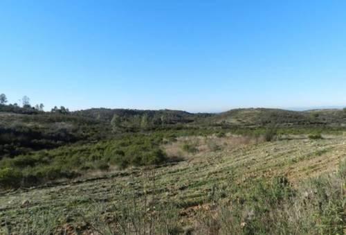imagen 2 de Venta de magnífica finca en Valverde del Camino (Huelva)