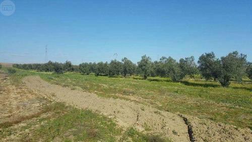 imagen 1 de Venta de finca olivar en La Palma del Condado (Huelva)