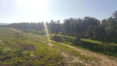 imagen 2 de Venta de finca olivar en La Palma del Condado (Huelva)