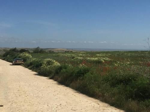 imagen 2 de Venta de finca en Chucena (Huelva)