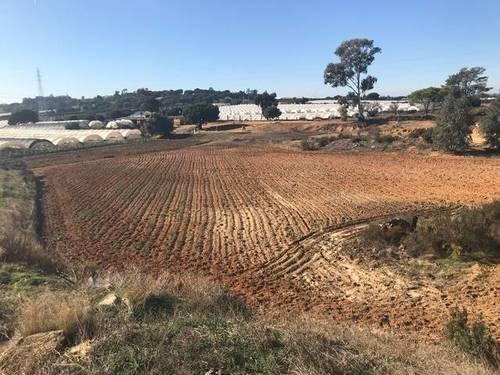imagen 1 de Venta de campo en Lepe (Huelva)