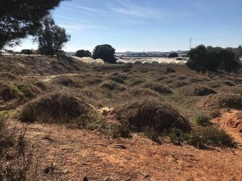 imagen 2 de Venta de campo en Lepe (Huelva)