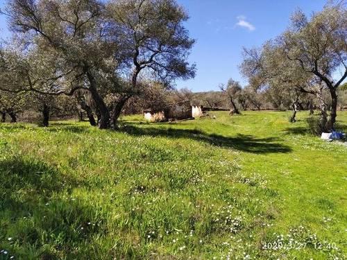 imagen 2 de Venta de estupenda finca en Aracena (Huelva)