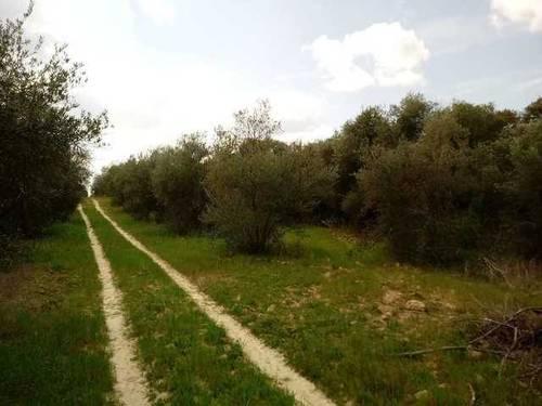 imagen 1 de Venta de finca olivar en Hinojos (Huelva)