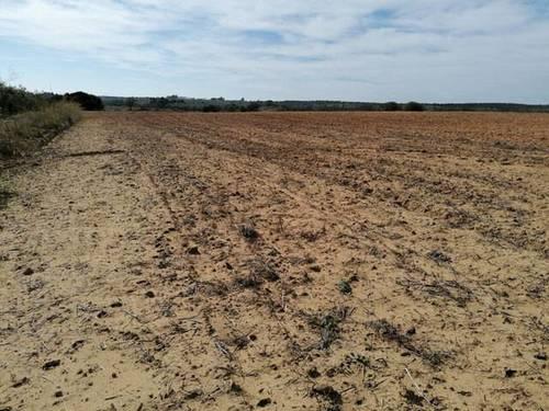 imagen 2 de Venta de campo olivar en Manzanilla (Huelva)
