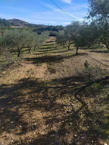 imagen 3 de Venta de gran terreno en Valverde del Camino (Huelva)