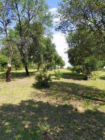 imagen 2 de Venta de gran terreno en Valverde del Camino (Huelva)