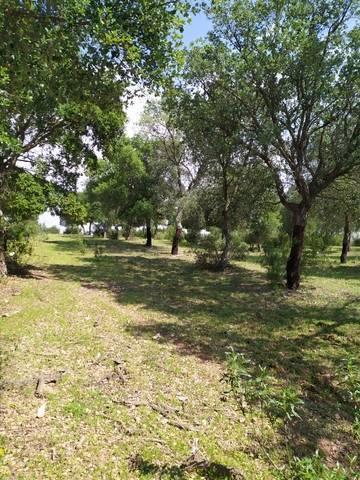 imagen 4 de Venta de gran terreno en Valverde del Camino (Huelva)