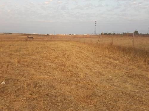 imagen 1 de Venta de terreno en Almonte (Huelva)